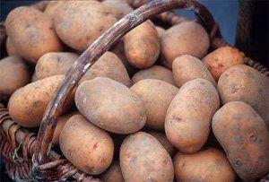 Картошка сорта «Кондор» выглядит очень привлекательно