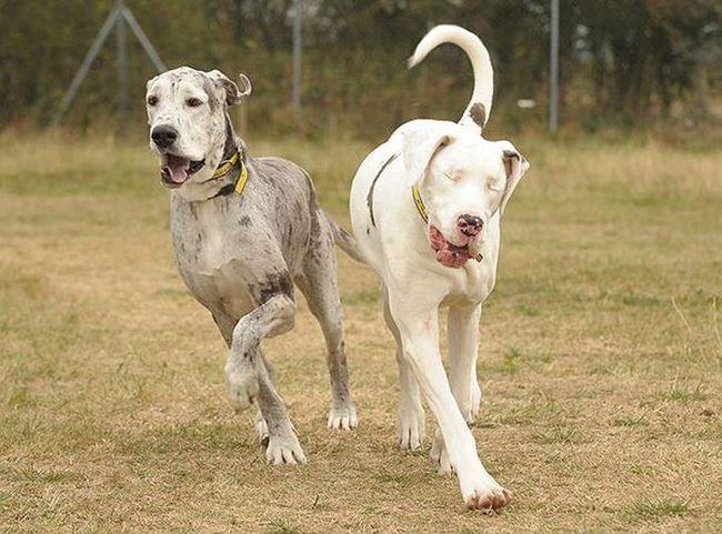 Blind Lily i njen vjerni prijatelj Maddison u potrazi za novi dom