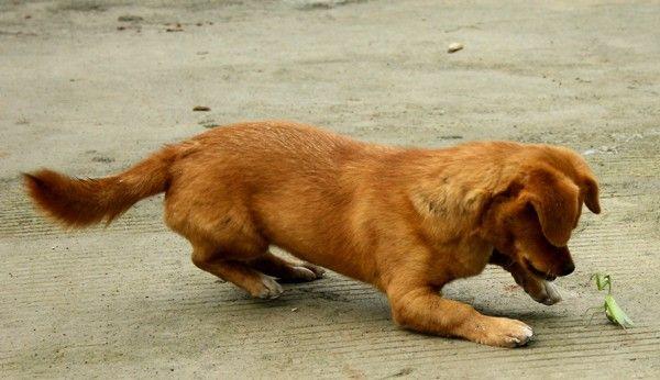 Bold označava Mantis Kung Fu vještine, borbe sa psom
