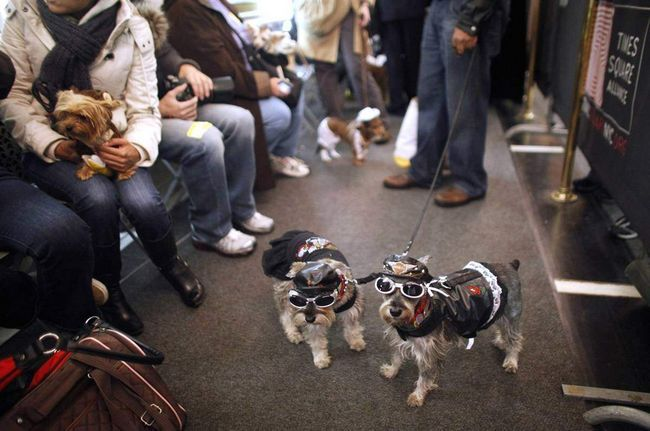 Cha-cha i Candy obučen kao bajkeri