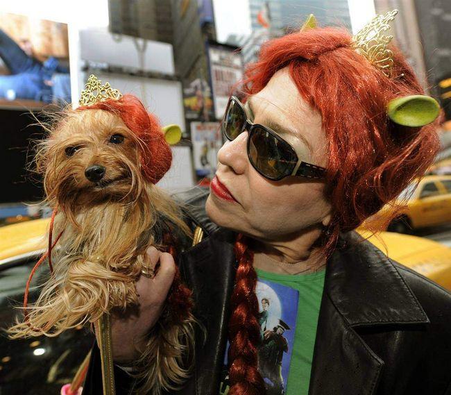 Jorkširski terijer u porit Princess Fiona kostim