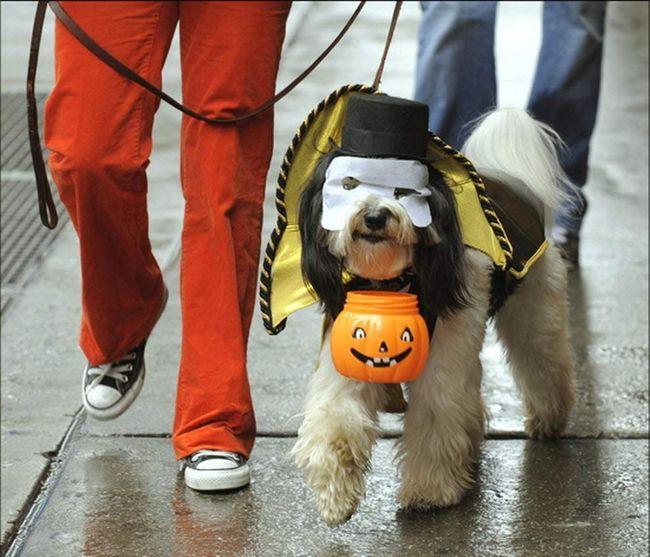 ERER Winston o psu maskenbal