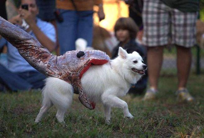 Pas po imenu puder u odijelu piton žrtva