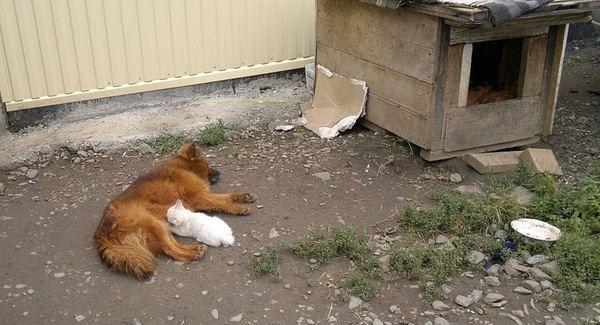 Pas se pobrinuo gluvog mače