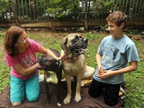 Cheryl rad kod kuće sa svojim psom Monty (lijevo). I njen susjed, 14-godišnji Ethan Rozman, sa svojim favoritima. Oba psi su davalaca krvi na druge pse