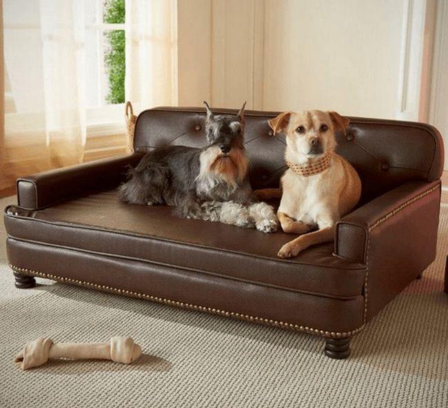 Собаки, которые ведут роскошную жизнь