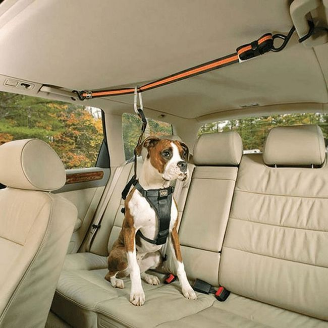 Psi koji vode luksuzan život