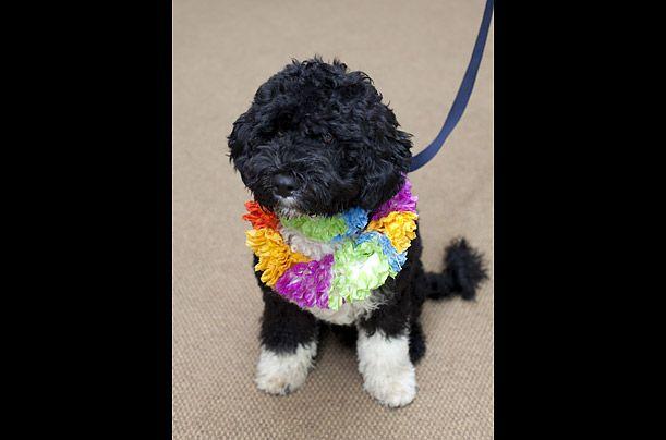 Portugalci vode psa po imenu Bo, u vlasništvu Obama