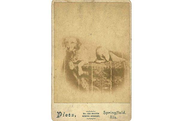 Beagle pod nazivom Lincoln na Fido