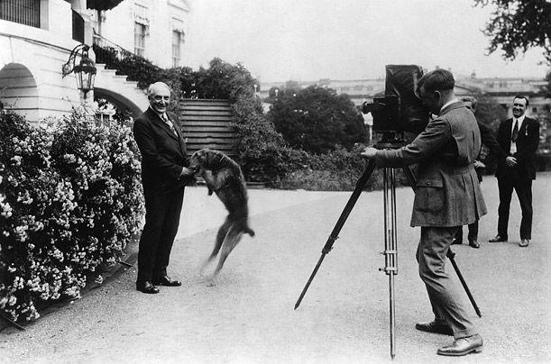 Harding i njegova Erdel Terijer Luddy Fight - ovaj pas je trebalo da imate stolicu ručno u kojoj je sedeo na svim sastancima na najvišem nivou. Njen rođendan se slavi poseban