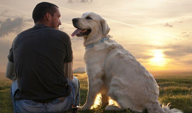 Čini se da psi mogu direktno interpretirati mase ljudskih postupaka, dovodeći ih zajedno.