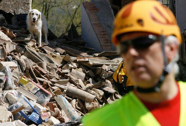 Собака провела под завалами девять дней, прежде чем ее спасли.