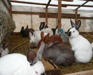 Sadržaj zečeva u kavezima