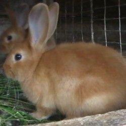 Sadržaj zečeva