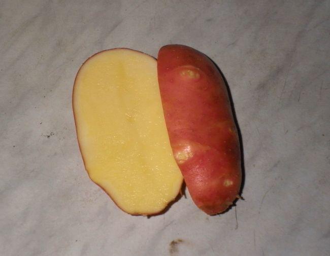 Ранний сорт картофеля