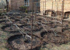 Hnojivá sú vždy len pozitívny vplyv na kríku