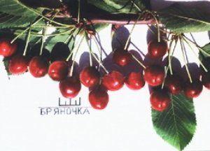 Плоды данного сорта очень вкусные