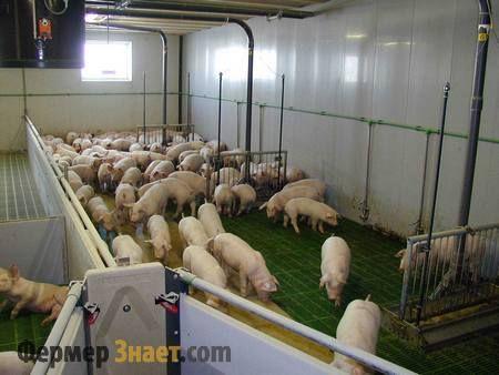 Mi smo sastaviti početne poslovni plan za male farma svinja