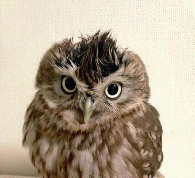 Owlet Fuku i mače Marimo - nerazdvojni prijatelji