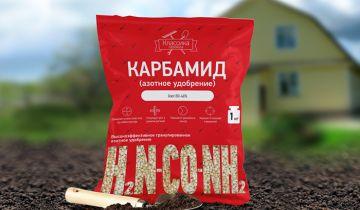 Советы выращивание клубники от опытных садоводов
