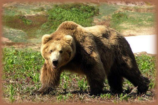 Saobraćaj policajac ubio svog brata da pobjegne medvjeda.