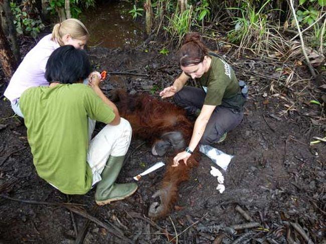 Люди помогли животному и нашли ему подходящий дом