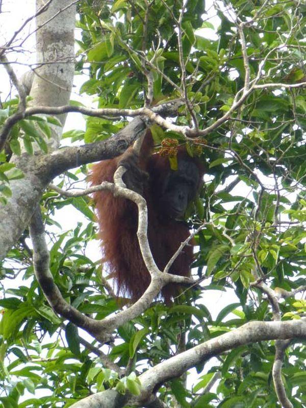 Бедное животное было вынуждено прятаться на дереве