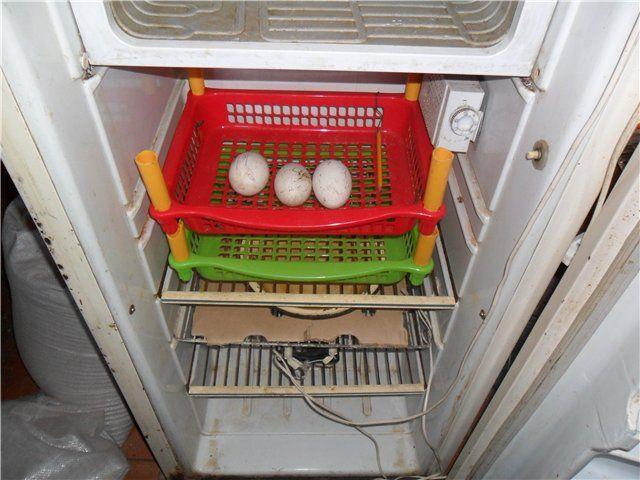 Инкубатор, сделанный собственноручно из холодильника