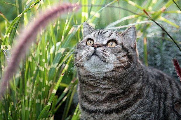 Средства от блох и клещей для кошек: выбираем лучшее!
