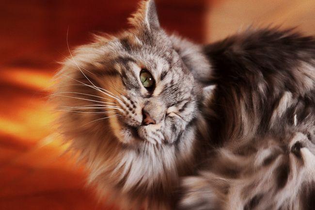 Mijloace de a priva pisicile