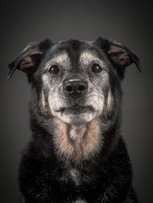 Starenje pasa u foto projekt Old Faithful (Old Faithful)