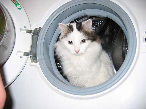 Mačka u stiralka
