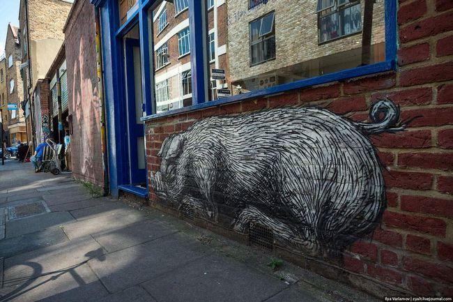Crna i bijela svinja legao da se odmori na fasadi zgrade.