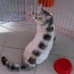 стрижки для кошек