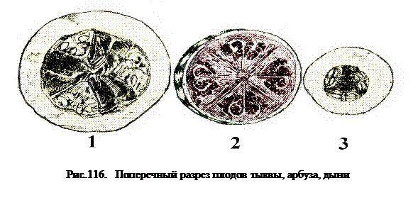 Struktura plodů a semen z melounů