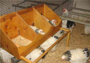 Куры в ящиках в птичнике