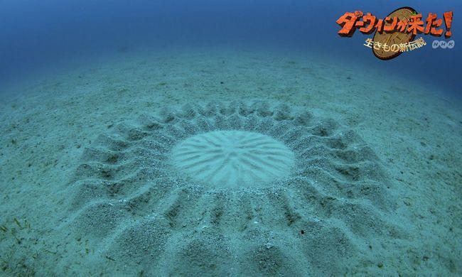 Misteriozni podvodni `Circles polyah`