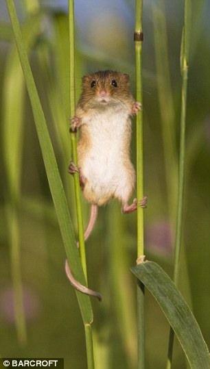 Тайная жизнь полевых мышей