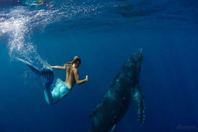 Hannah sirena pliva sa ogromnim mora - kita.