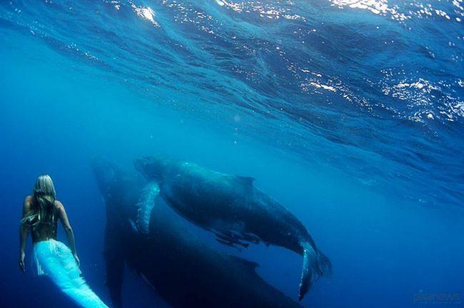 Vanredna snimke podvodne Hannah Fraser.