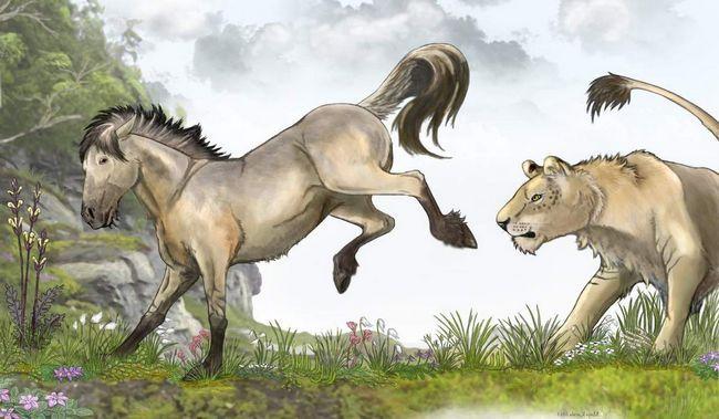 Ľudia a zvieratá lovia tarpans náležite chutné mäso z koňa.