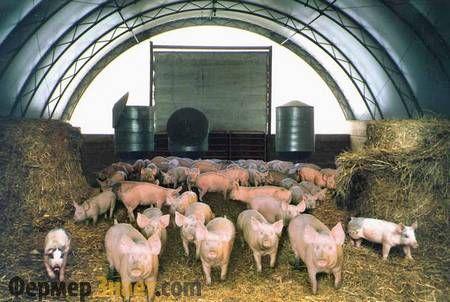 Kanadski tehnologija za svinje
