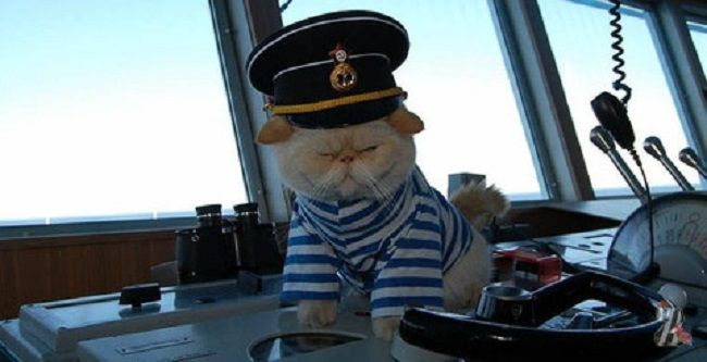 Mornar - čuveni kapetan mačke.