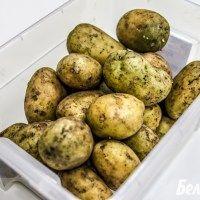 Termičkog šoka, ili kako i zašto saditi zelenilom sjemenskog krumpira?