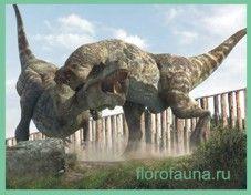 Тираннозавр/ tirannosaur