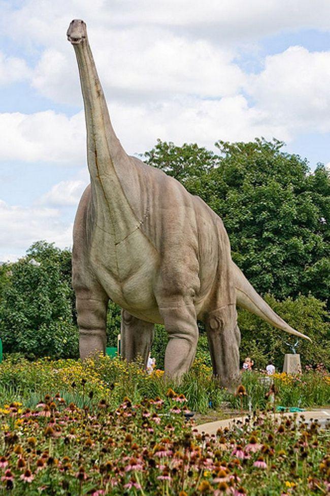 Titanosaurs model.