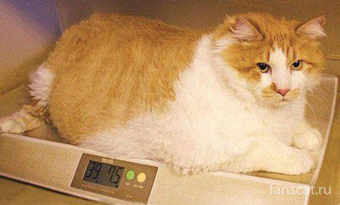 kočka Garfield