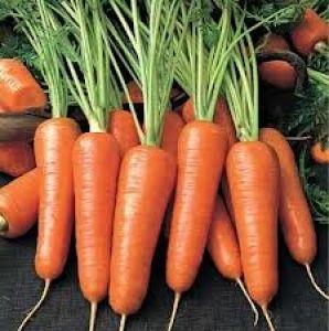 Хороший урожай зависит от плодородности земли