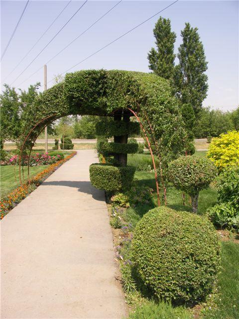 Topiary - Topiary i raznih grmlja