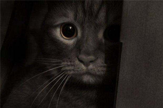 Транспортировка больной или травмированной кошки